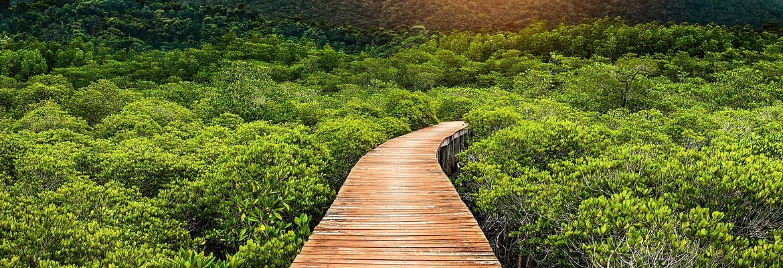 AIDA + Hotel Kombis Asien mit AIDAbella & Ocean Breeze Resort