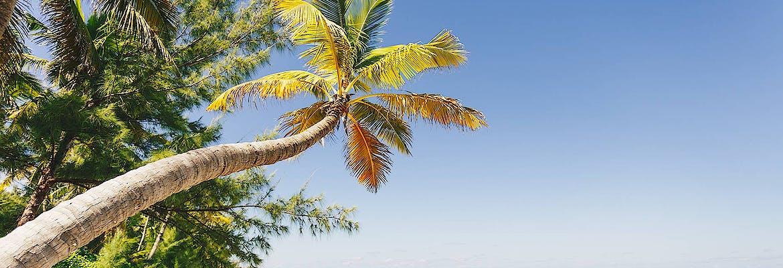 Suiten Special Winter 2022/23 - AIDA Selection - AIDAvita - Große Winterpause Karibik