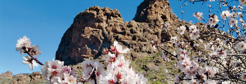 Winter 2020/21 - AIDAmar - Kanaren & Madeira mit La Palma inkl. Frühbucher-Ermäßigung