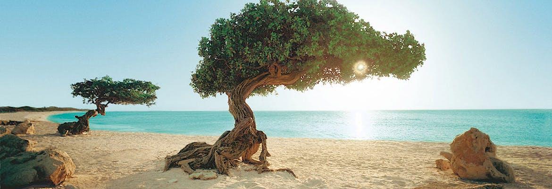 Mein Schiff 5 - Mallorca bis Barbados