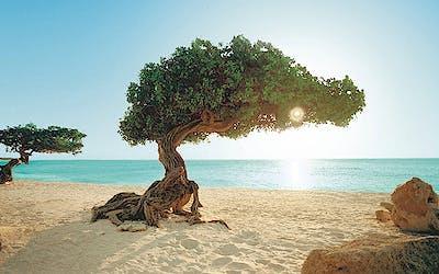 Barbados trifft Mallorca