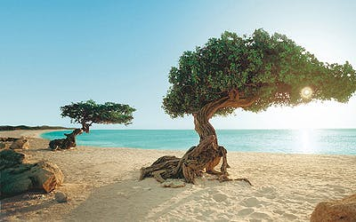 Karibik trifft Mallorca II
