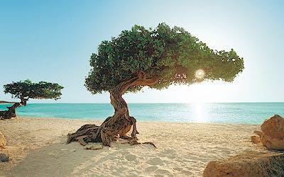 Karibik Feiertagsreisen